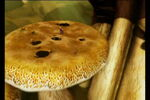 Mermaidia-disneyscreencaps.com-8101