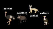 Ostrich, Warthog, Jackal, and Vulture