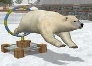 Polar-bear-wildlife-park-2