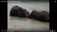 Really Wild Animals Asian Elephants