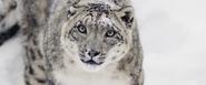 Sno leopard 1280 534 top desktop