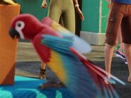 TarJan Scarlet Macaw