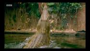 The Zoo Crocodile