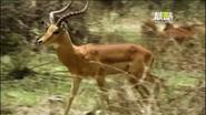 UTAUC Impala