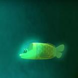 Barreleye Spookfish