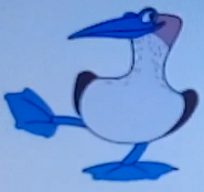 Batw-animal encyclopedia-blue-footed-booby
