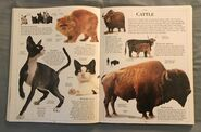 DK Encyclopedia Of Animals (55)