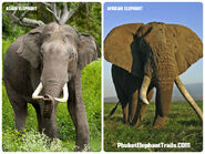 Different Types of Elephants