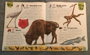 Endangered Animals Dictionary (25)