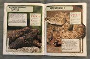 Nature's Deadliest Creatures (47)