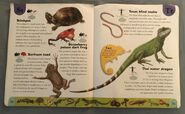 Reptiles and Amphibians Dictionary (23)