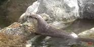 San Francisco Zoo Otter