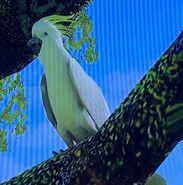 Sulphur-Crested Cockatoo ZTX