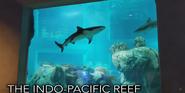 Toledo Zoo Sharks