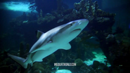 WWLZ&AQ Shark
