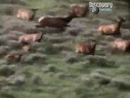 AFO Elks