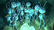 Blueberry Troop Kids