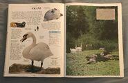 DK Encyclopedia Of Animals (157)