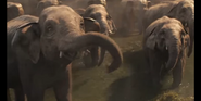 Dumbo 2019 Elephants
