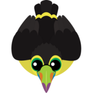 Mopeio Keel-Billed Toucan
