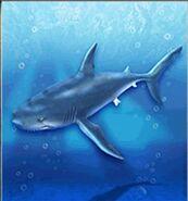 Shortfin Mako Shark ZT