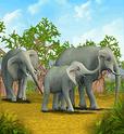 ZT-African Elephant
