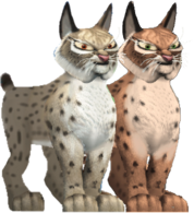 All Creatures Big and Small Lynxes