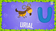 Baby Time Urial