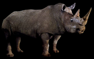 Beast blender white rhino