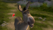 Donkey gets tranquilized by trishagaurav dcdu1iy-fullview