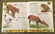 Endangered Animals Dictionary (12)