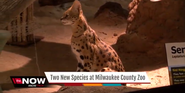 Milwaukee County Zoo Serval