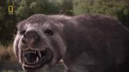 Prehistoric Predators Amphicyon 1 zpsh7evriyk