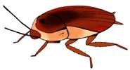 Roach ty-the-tasmanian-tiger