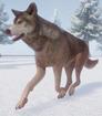 Wolf, Northwestern (Planet Zoo)