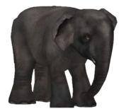 Zoo Tycoon Asian Elephant
