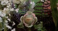 Audrey-II-and-Little-singing-plantlets-little-shop-of-horrors-6641542-500-270