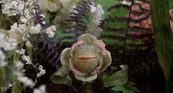 Audrey-II-and-Little-singing-plantlets-little-shop-of-horrors-6641542-500-270.jpg