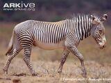ETHIOPIAN ANIMAL