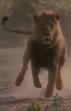MATG Lion