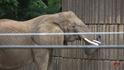 Memphis Zoo Elephant (V2)