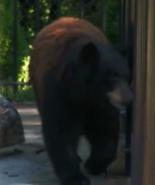Niabi Zoo Bear