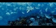 Oceans 2010 Moon Jellies