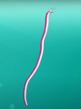Octonauts oarfish