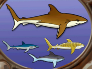 Sharks in hugo lek och lar 7 hugo och djuren i havet