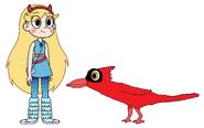 Star meets Cardinal