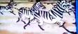 TWT 1998 TV Show Zebras