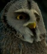 Twilight in Legend of the Guardians The Owls of Ga'Hoole