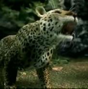 AFO Leopard