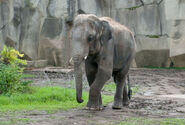 Photo-detail-asia-asian-elephants-4